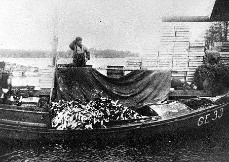 Alvar Bergman, 3:e generationens fiskare