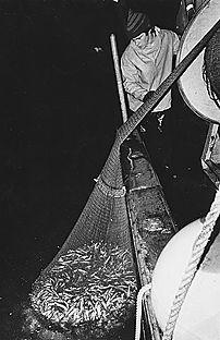 Hans Bergman, 4:e generationen fiskare